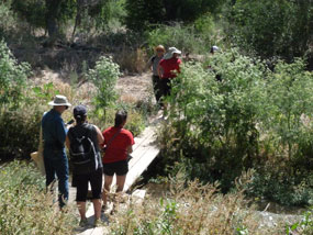 hikers and ranger crossing footbridge over creek