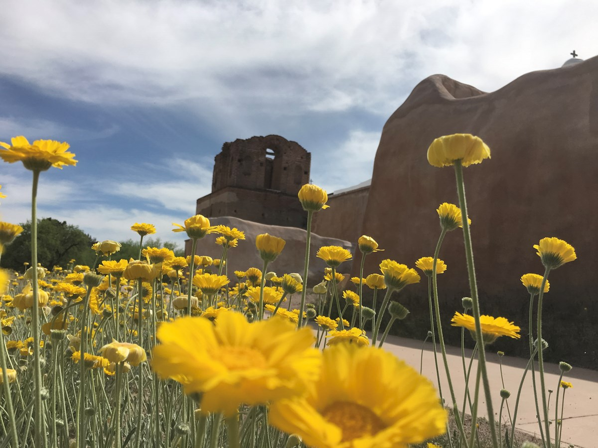 Photograph looking up at flowers with adobe church in the background.