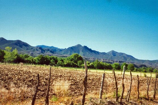 Sonoran farm fields