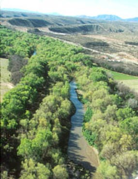 river corridor surrounded by cottonwood trees
