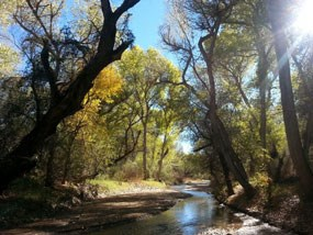 river with golden cottonwoods