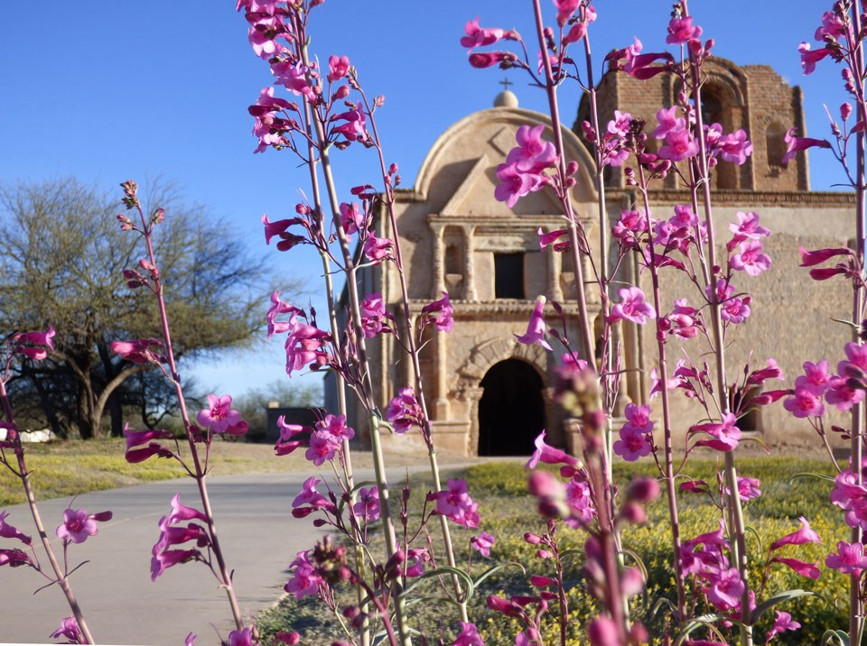 ground view with pink flowers in foreground and church behind