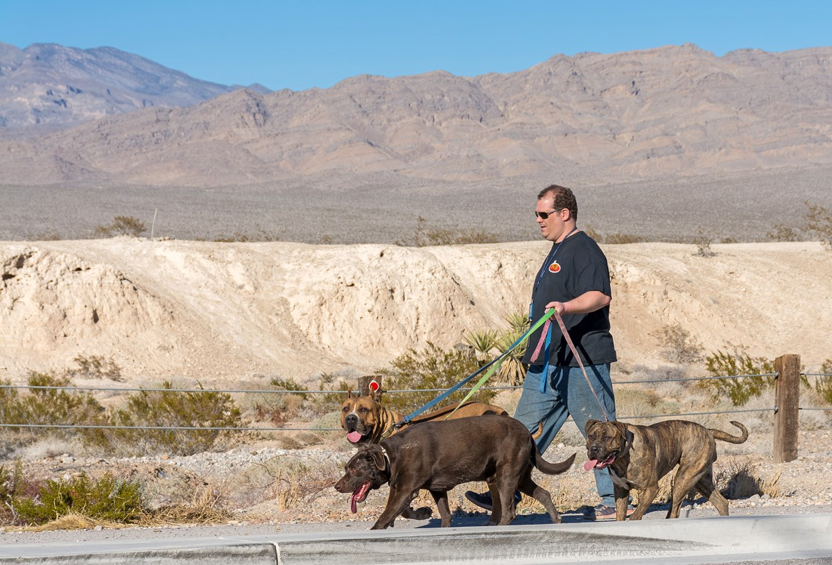 Pets at Tule Springs Fossil Beds National Monument