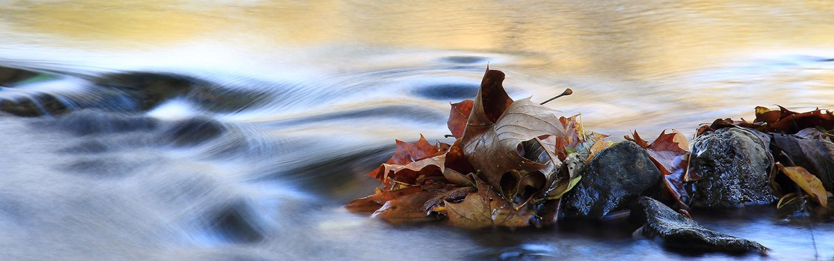 A river with wispy current flows around leaves caught on some river rocks.