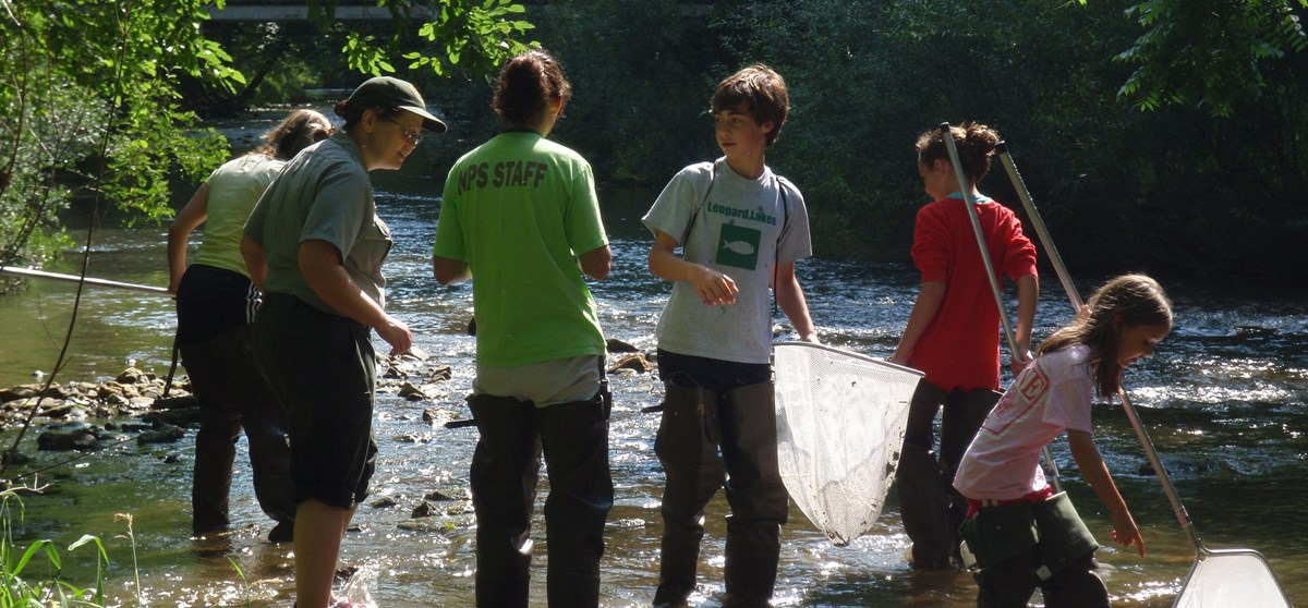 Volunteers in a creek on a sunny day hunt for crayfish using nets.