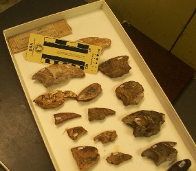 Fossils from Giant Sloths found at Port Kennedy in Valley Forge NHP