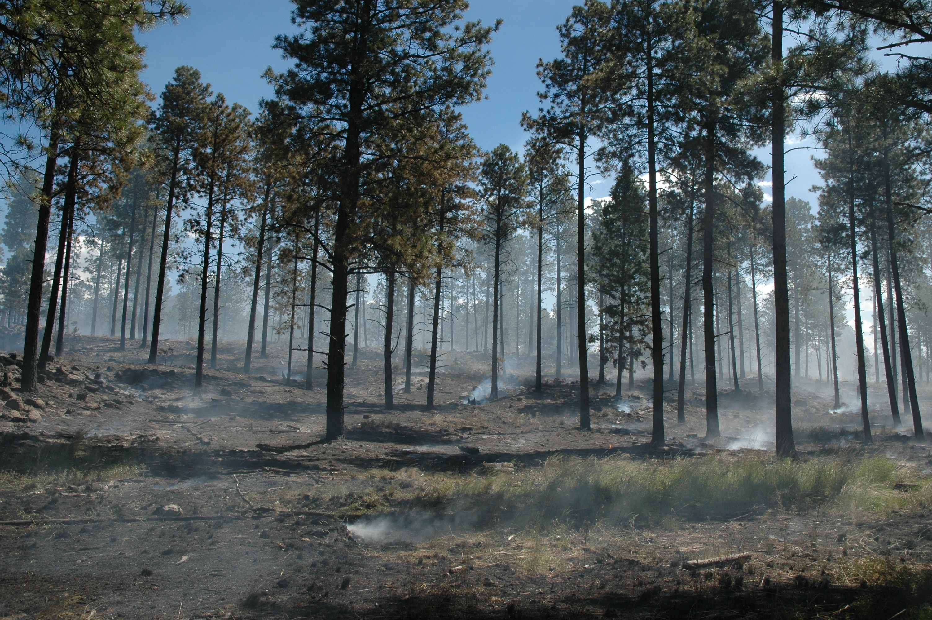 Managed for resource benefit, the lightning caused Big Hat Fire moves slowly through a recently thinned area in the Valles Caldera National Preserve.