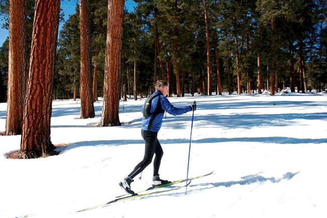 A person cross-country skiing through History Grove
