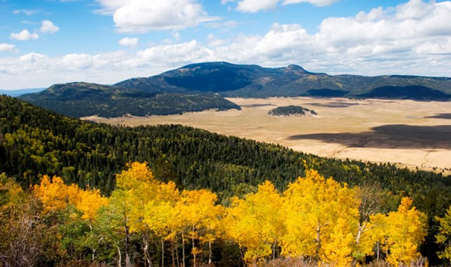 A slope covered with aspen and evergreens with a valley below and mountains in the distance.