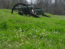 Wildflowers and Cannon