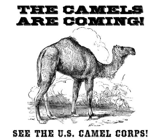 the u s  camel corps visits vicksburg national military park