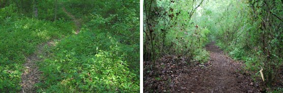 Al Scheller Hiking Trail. Left: Summer 2009 before trail work. Right: October 2009 after maintenance and upgrade by AmeriCorps team.