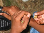 This picture is a closeup of children's hands, one of which is holding a small tree snail.