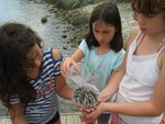 Three girls are at a rocky seashore in Virgin Islands National Park.  They are carefully pouring seawater over a sea urchin in their hands, to keep it healthy, while they examine it.