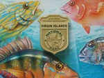 Virgin Islands National Park Junior Ranger badge, with poster images of colorful local fish in the background