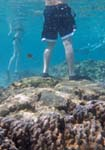 underwater picture showing 2 snorkelers; one is behaving irresponsibly by standing on coral