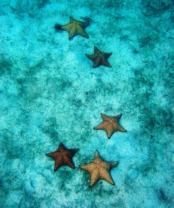 Looking through clear, bluish seawater, there are 5 sea stars on the seafloor.