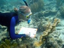 Researcher Collecting Data