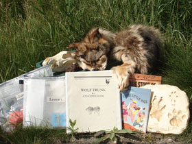 Contents of the Wolf Pack Education Trunk, pelts, tracks, books, activities.