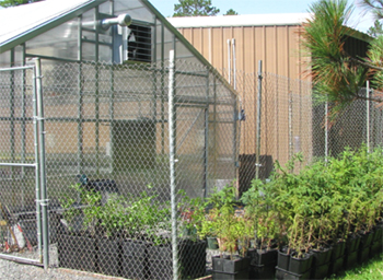 Exterior view of Native Plant Nursery with rows of potted pine trees.