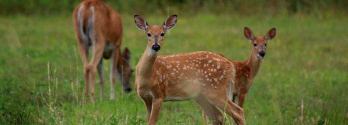 Animals Voyageurs National Park U S National Park Service