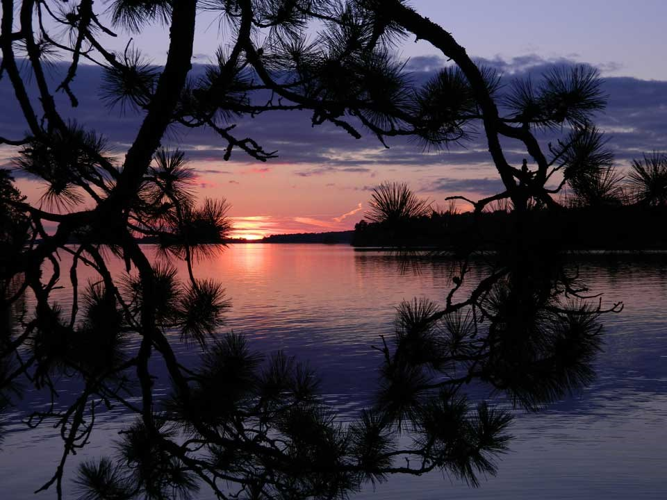 A purple and red sunset over a calm lake surface, viewed through the bows of a Jackpine.