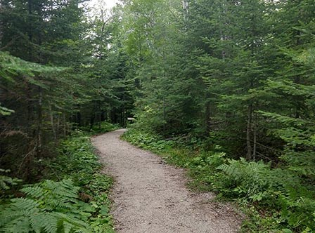 A brown gravel trail winds into the woods, bordered by large green trees and ferns on both sides.