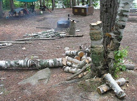 Branches from a birch tree in the foreground litter a campsite, with some piled next to a fire ring with an unattended campfire. A bear locker and camping gear can be seen in the background.