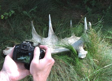 Two hands hold a camera with an image of a moose antler on the display screen. The same antler is seen on the ground in front of the camera.