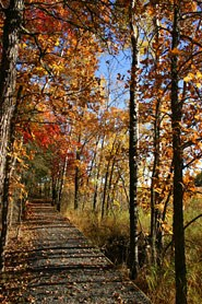 Oberholtzer Trail in the Fall