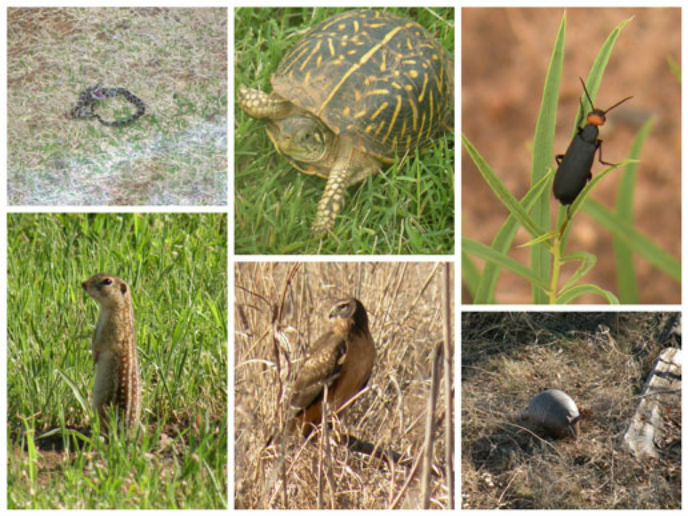 A collage of some of the different animals at Washita.