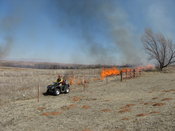 Igniting the Prescribed Fire at Washita