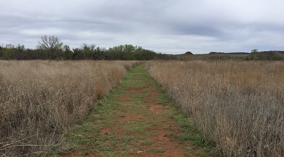 Unpaved trail going through open grassland with tree lines on either side