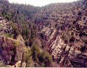 Shaded forest on one side, drier canyon wall on the other