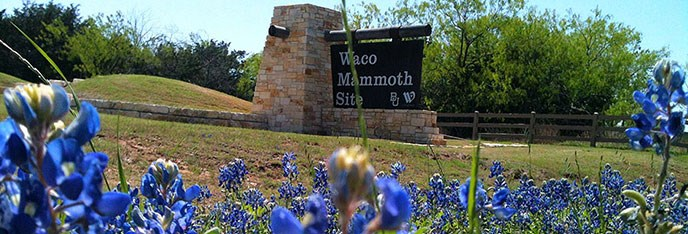 Waco Mammoth Entrance sign with bluebonnets in foreground.
