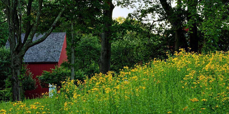 Weir Farm landscape with yellow flowers and red building