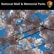 Facebook badge for the National Mall and Memorial Parks showing blossoming cherry trees.