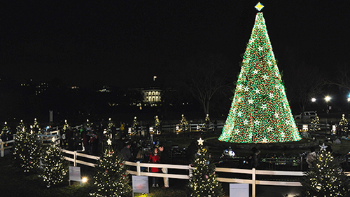 National Christmas Tree President's Park White House U S  - Christmas Lights Christmas Tree