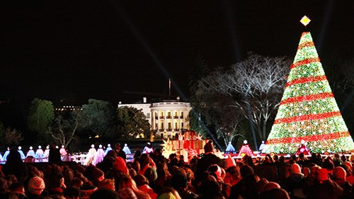 audience and the national christmas tree - White Christmas Tree Lights