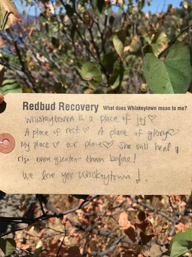 "A ""leaf"" of the Redbud Recovery Tree. Leaf text written by a community member and reads: ""Whiskeytown is a place of joy, a place of rest, a place of glory. My place. Our place. She will heal and rise even greater than before."""