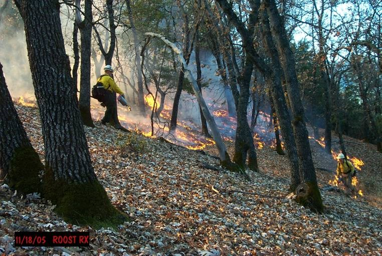 ignition on prescribed burn