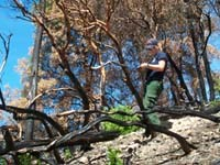 NPS technician collecting burn severity data in a prescribed burn