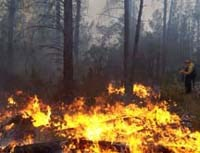 Fire behavior during fall prescribed burn treatment