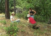 NPS technicians reading a shaded fuelbreak vegetation plot.