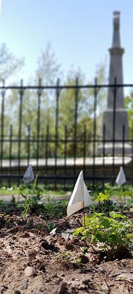 white flags in dirt next to plants that were recently planted with a historical monument in the background