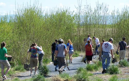 students plant shrubs along the new Doan Creek. Tall willows grow immediately adjacent to the stream.