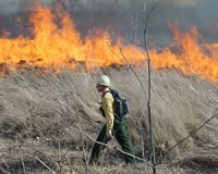 Photo: a member of the fire crew keeps an eye on a controlled burn.