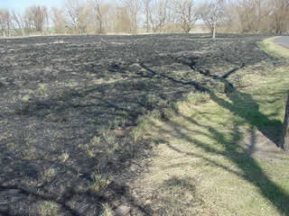 Ground has been burned and is black.