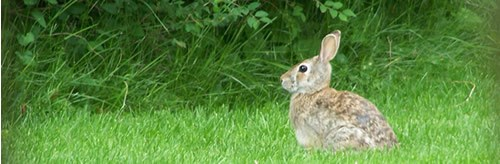 rabbit sitting on green grass