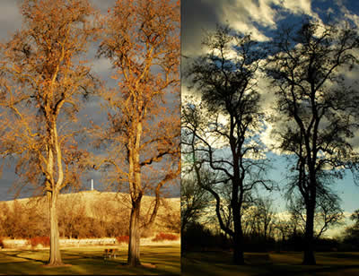 Two photos of the same trees. In the first the trees glow in golden light. In the second the trees form dark silhouettes.